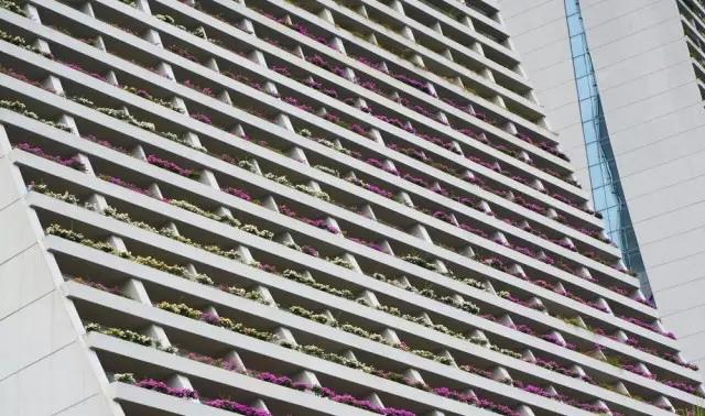 金沙酒店阳台绿化(角度一)