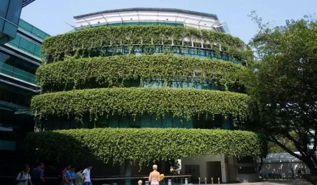 街头建筑外立面垂直绿化