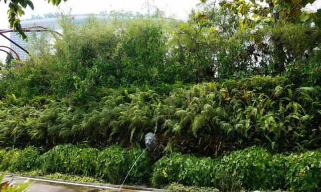 滨海湾花园游步道边的垂直绿化
