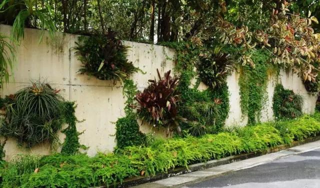 滨海湾花园墙面绿化