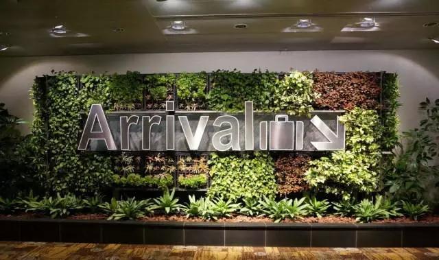 樟宜机场室内垂直绿化墙