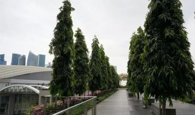 过街天桥绿化