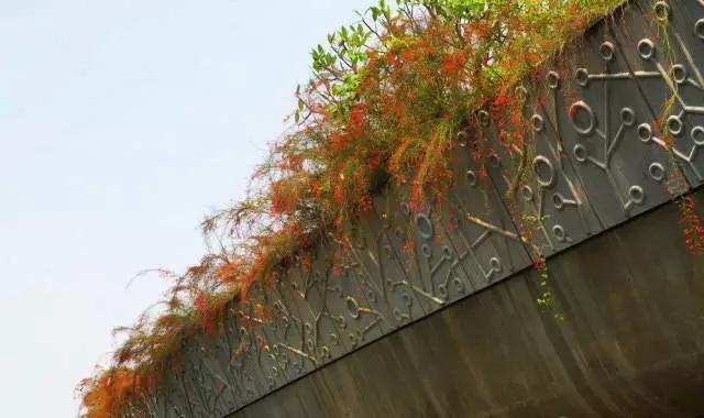 某桥面绿化